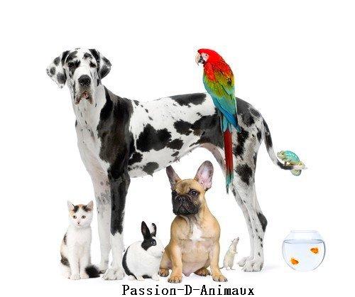 Animal Domestique
