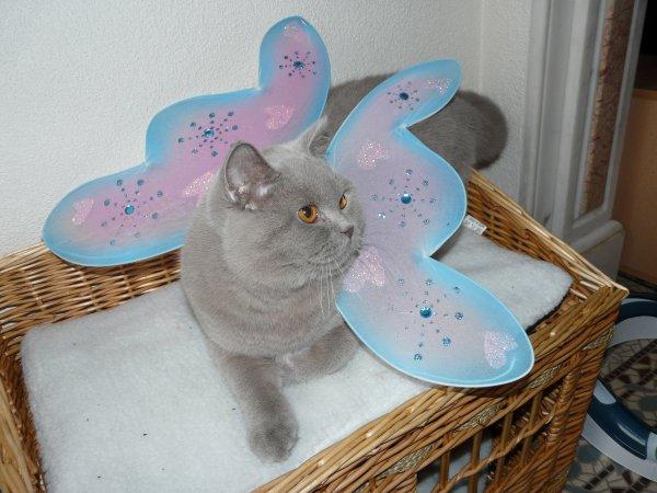 haribo mode papillon