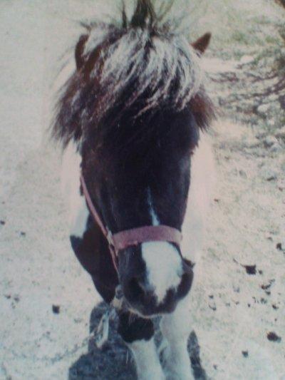 ce poney lui ossi a sa place dans mon coeur alors je lui doi bien çà