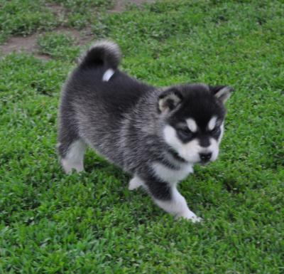 Hé hé mon futur petit chien chien :p