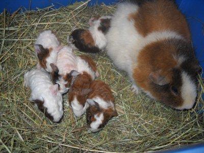 Huit bébés d'un coup!