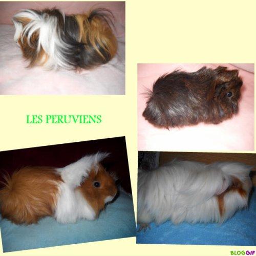 Les péruviens