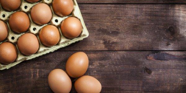 Tous les ½ufs que vous mangerez en 2022 devront venir de poules élevées en plein air