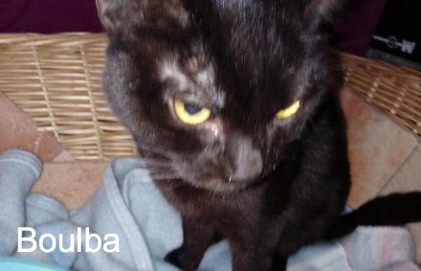 Boulba, malade, était dans la rue. Il était tellement mal qu'il ne mangeait même plus !