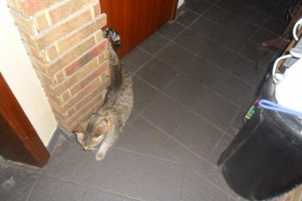 déjà 32 semaine que tu es partie mémère - Hommage as mémère une de mais chatte décède