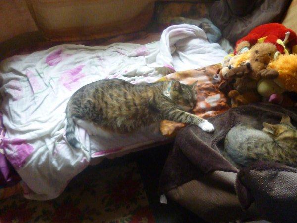 déjà 33 semaine demain que tu es partie mémère - Hommage as mémère une de mais chatte décède