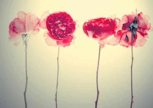 « Il y a des fleurs partout pour qui veut bien les voir.»  Henri Matisse.