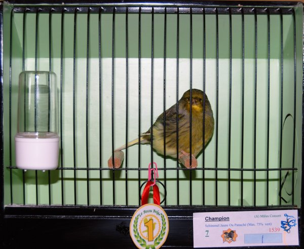 Quelques oiseaux au One Day Gloster Show de Liège (Ans) 2016
