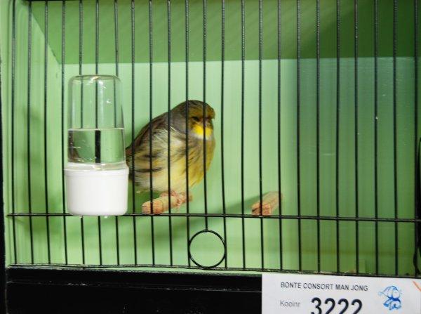Quelques oiseaux au Kempen troffee 2016