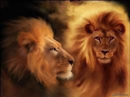 lion furieux