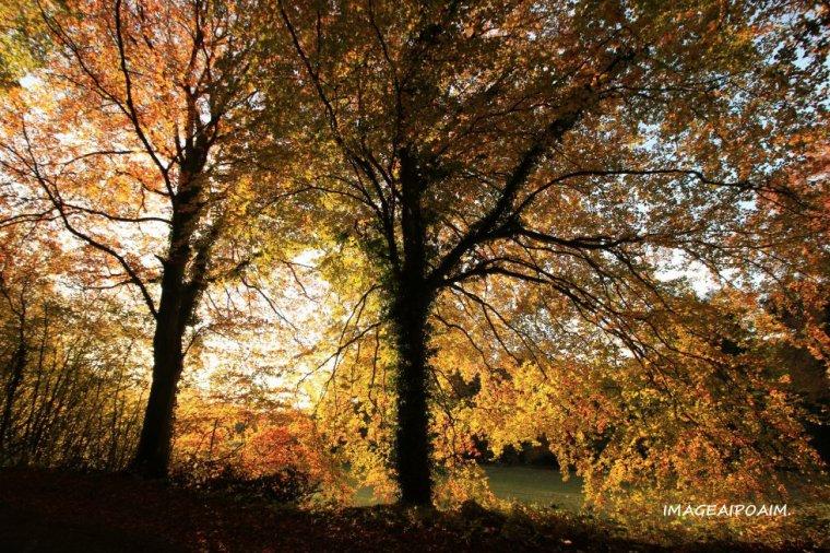 Couleurs d'automne ...