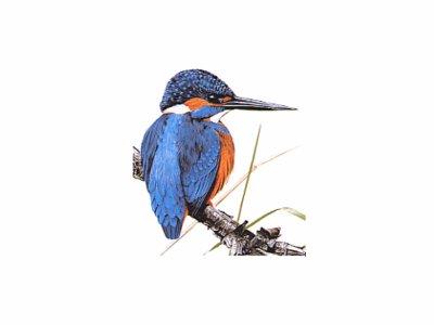 bleu subtil