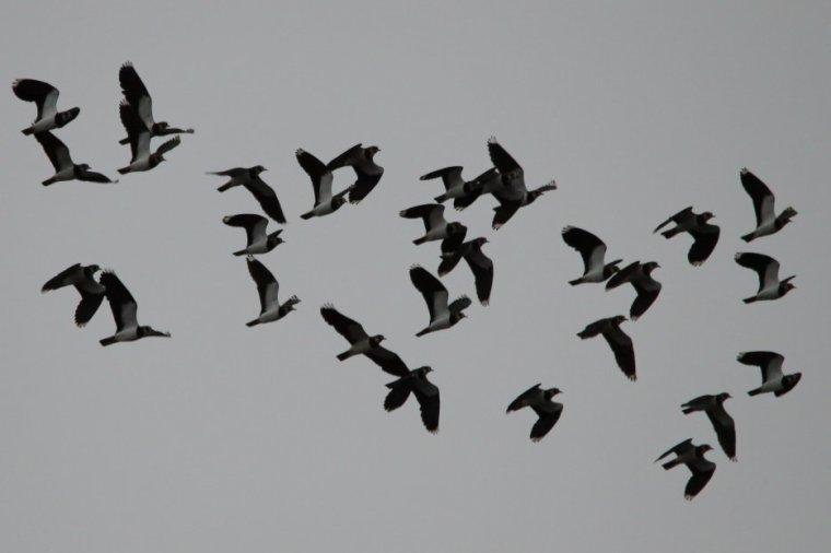 A l'heure des migrations...