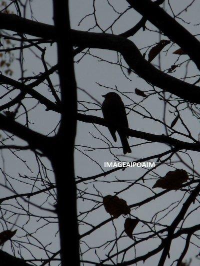 Un oiseau sur une branche ...
