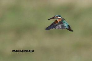 La liberté au bout des ailes ...