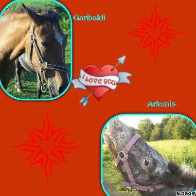 mes chevaux garibaldi et artemis