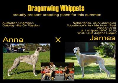 Dragonwing Secret Flame