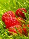 Photo de o0-Raspberry
