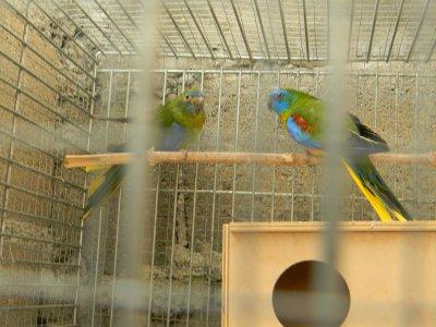 la suite de mes oiseaux