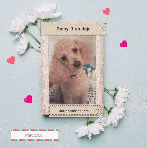 Tu nous manque ma daisy