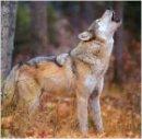 Photo de animal-65