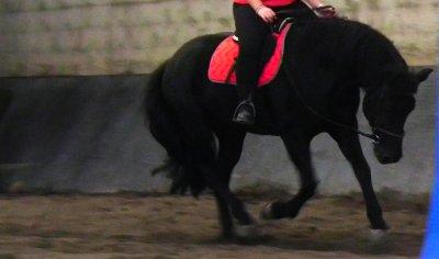 Ce n'est pas un cheval, c'est un Mérens. ♥