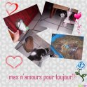 MES AMOURS POUR TOUJOURS...