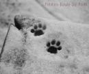 Photo de Petites-Boule-De-Poils