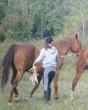 Photo de CHC-HORSES