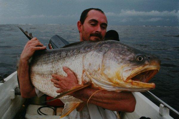gabon le pays des poissons geants partie 2 franck