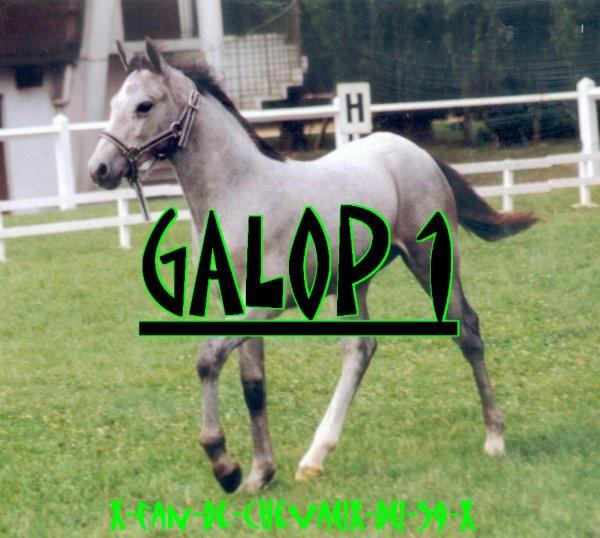 ╔════════════════════════╗ GALOP 1 ╚════════════════════════╝