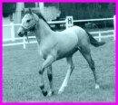 Photo de x-fan-de-chevaux-du-59-x