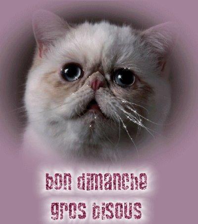 Bon Dimanche A Vous Mes Ami(E)S