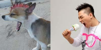 Quelques une de nos divinités en animaux ça donne quoi? XD Enjoy it ! II
