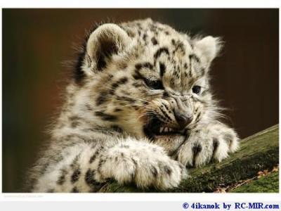 Bebe tigre tite princesse - Bebe tigre mignon ...