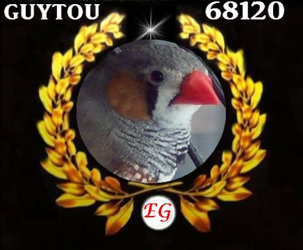 blog oiseaux  mandarin diamant.