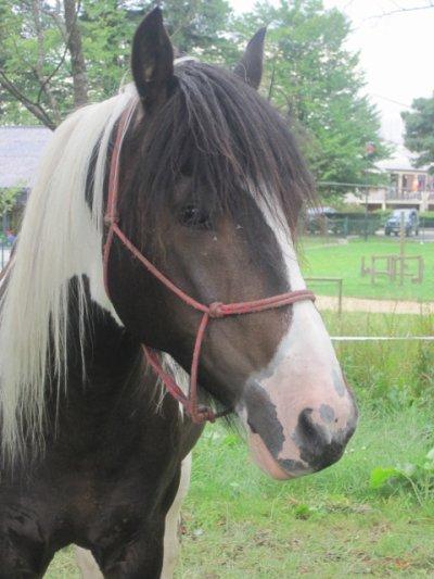 """""""Le cheval est la projection des rêves que l'homme se fait de lui-même: fort, puissant, magnifique. Il nous offre la possibilité d'échapper à la monotonie de notre condition"""" Walt Morey"""