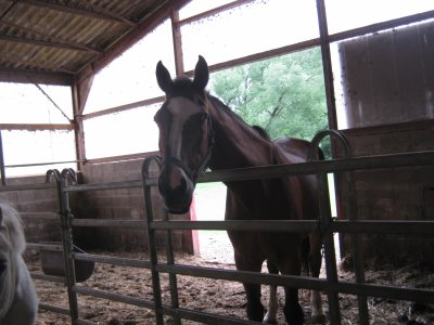 présentation des chevaux de couroux