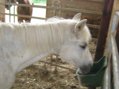 présentation des chevaux de courroux