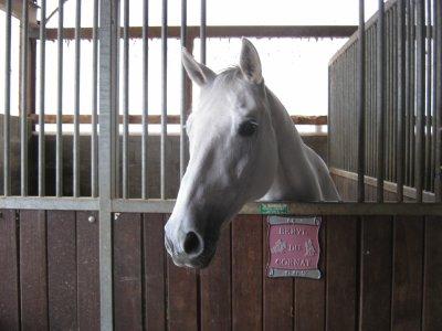 présentation chevaux de courroux
