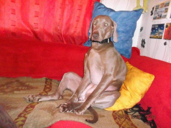 un chien qui  attend sa maitresse