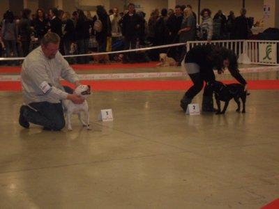 Funny white girl du pays des molosses meilleur jeune paris dog show je suis super content