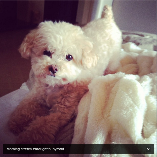× Photo de Maui postée sur Instagram par Ashley :-)