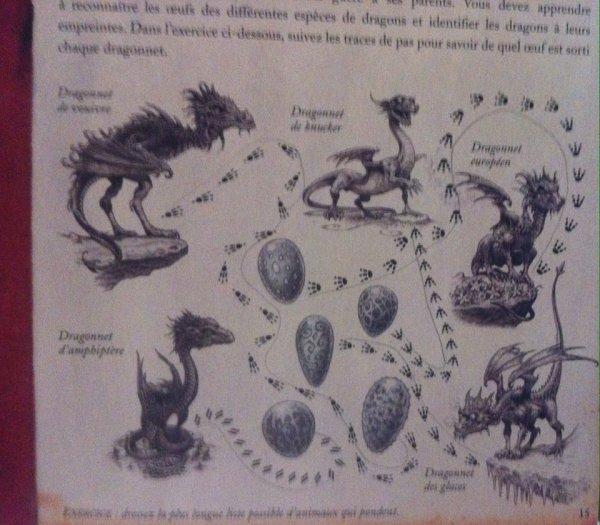 Dragonologie par Aqualia - Leçon I - suite