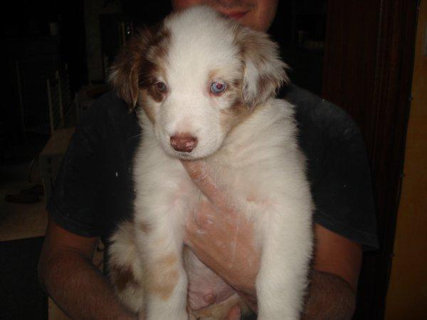 Moi c'est Lawson,je suis parti chez Justine et son compagnon,le 18-09-2012.
