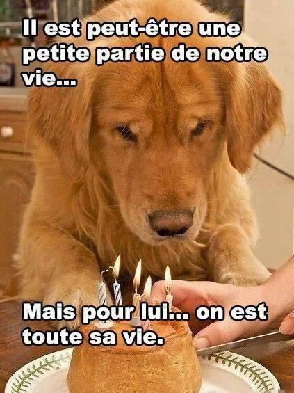 Aimez vos animaux !!!