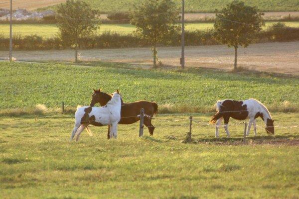 Ferme Equestre du Bois du Roi