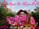Photo de Rose-de-Mgouna