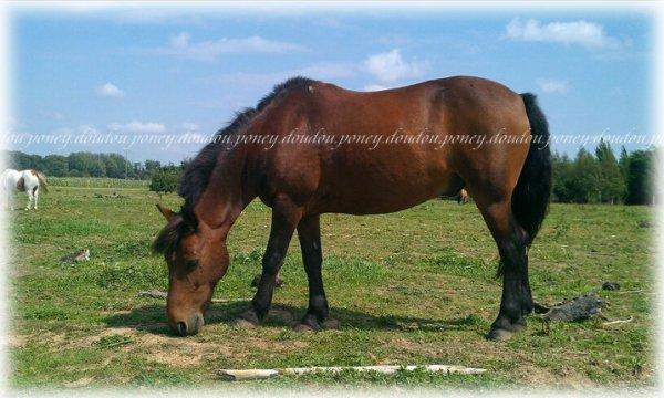 Joli poney <3