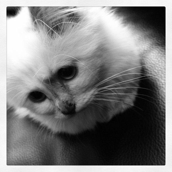 Choupette, le chaton de Baptou ! Et le Twitter de Baptiste :)